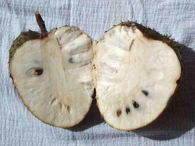 Le fruit Corossol! mille et une vertus! Corossol_ouvert